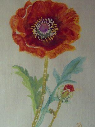 Mohnblumen aquarell